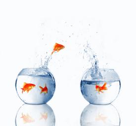 Frisches Marketing - so wie ein Fisch springt.